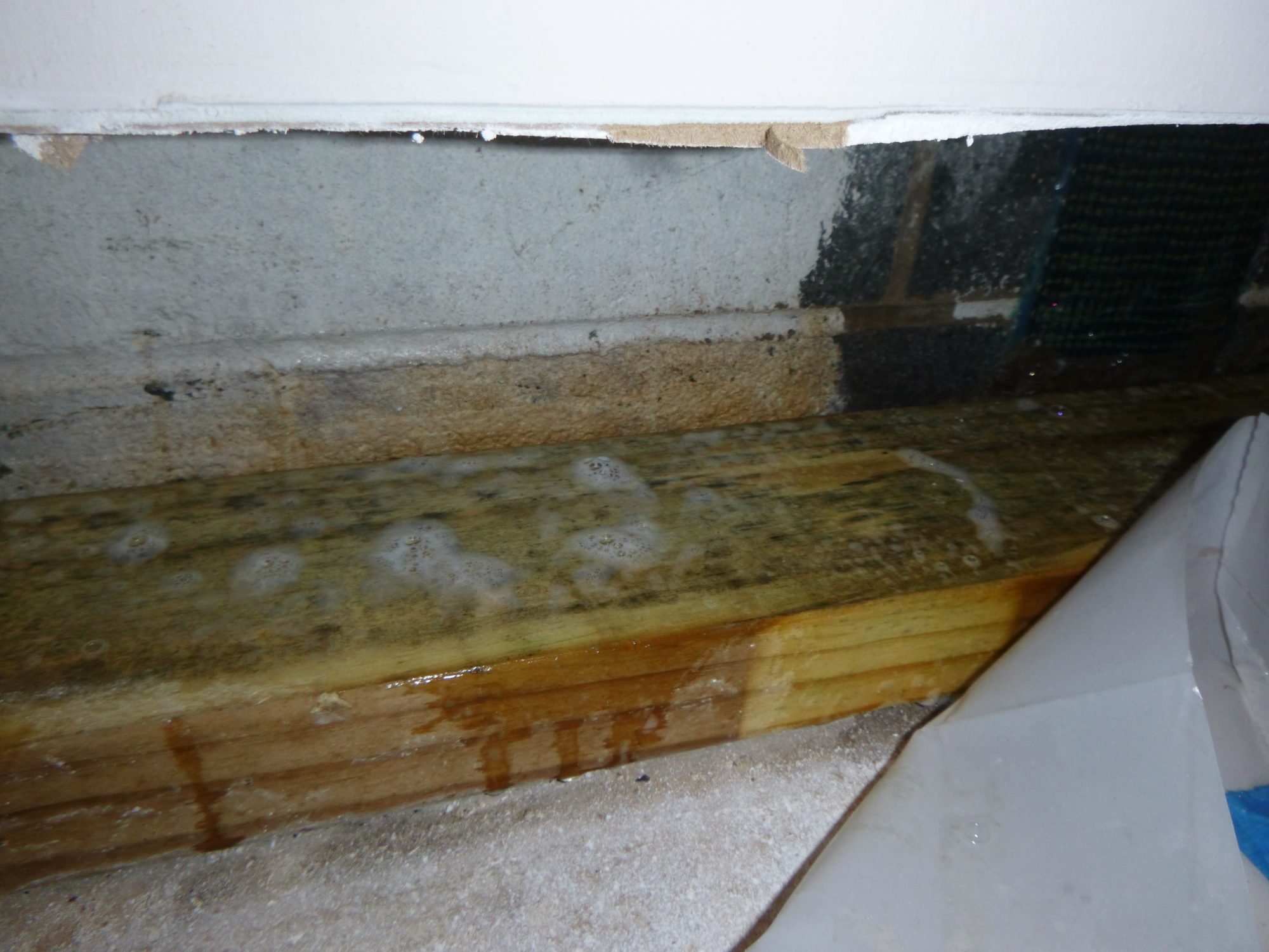 crawl space mold cleaning