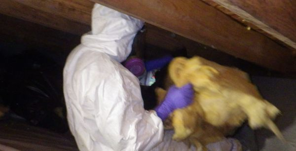 crawl space contents disposal